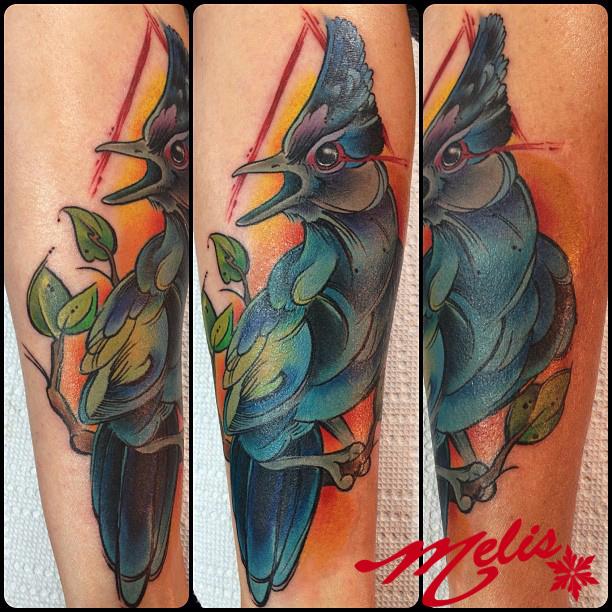 melissa fusco sketch style  watercolor stellar jay bird tattoo colorado